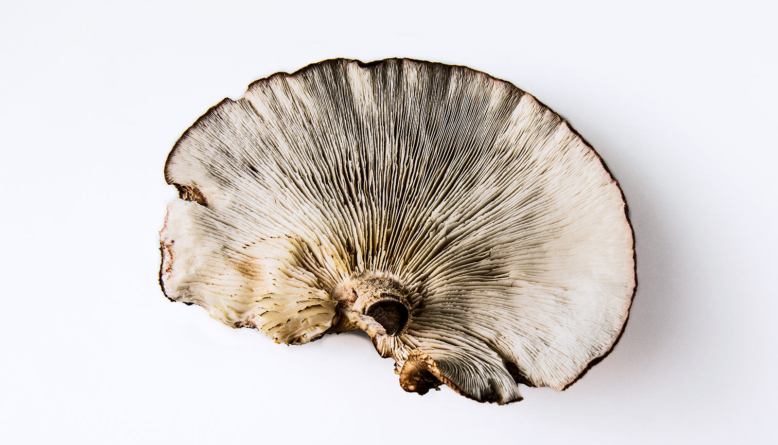 Eat mushrooms to keep your brain sharp?