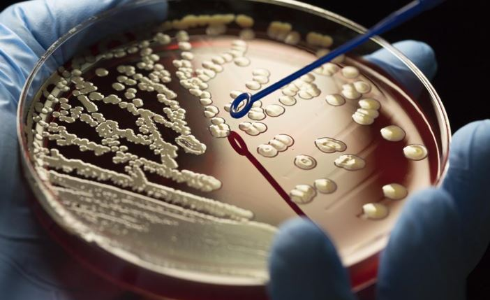 The rise of superbugs: Facing the antibiotic resistance crisis